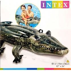 Krokodil Strandcikkek